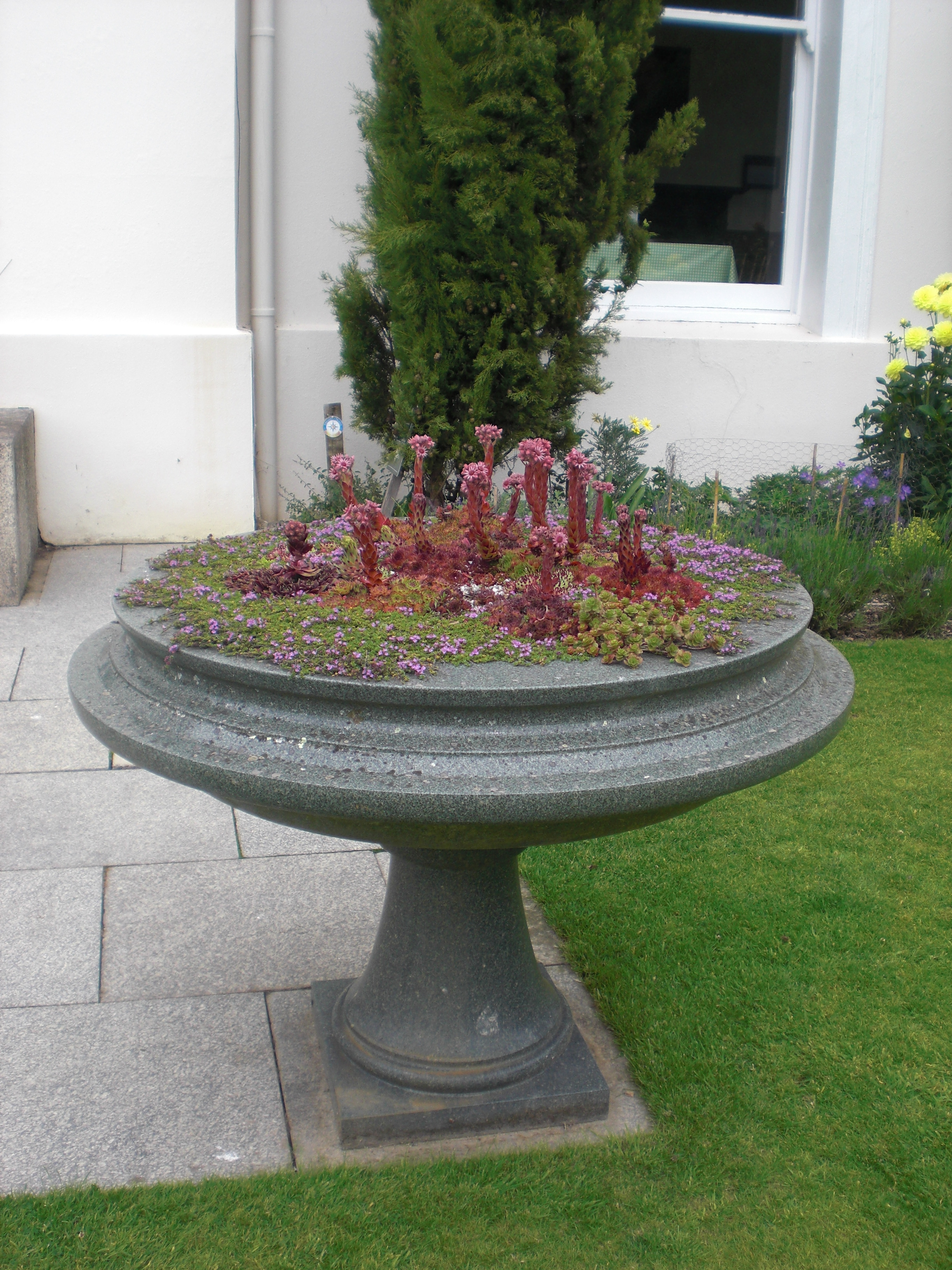 The Fascinating - Trevarno planter with a difference