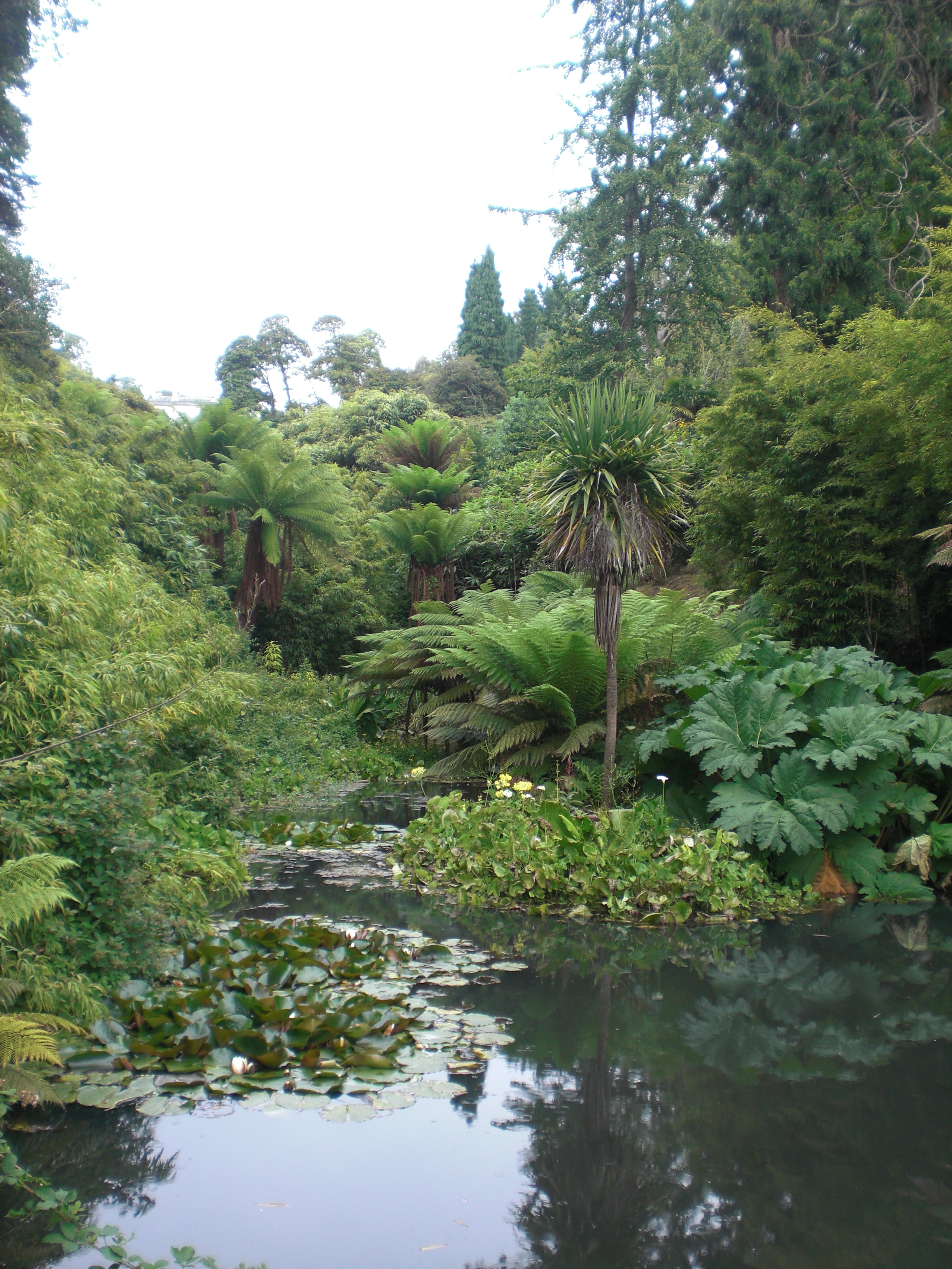 The grand (but exciting)  Lost Gardens of Heligan Jungle