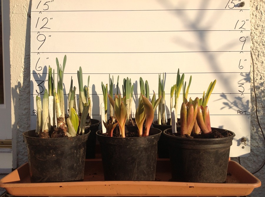 Bulbs from the workshop (February 17th)