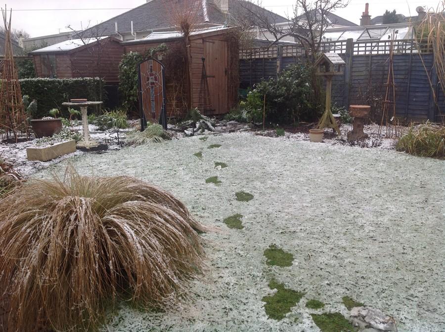 Cold wet snow in George's garden