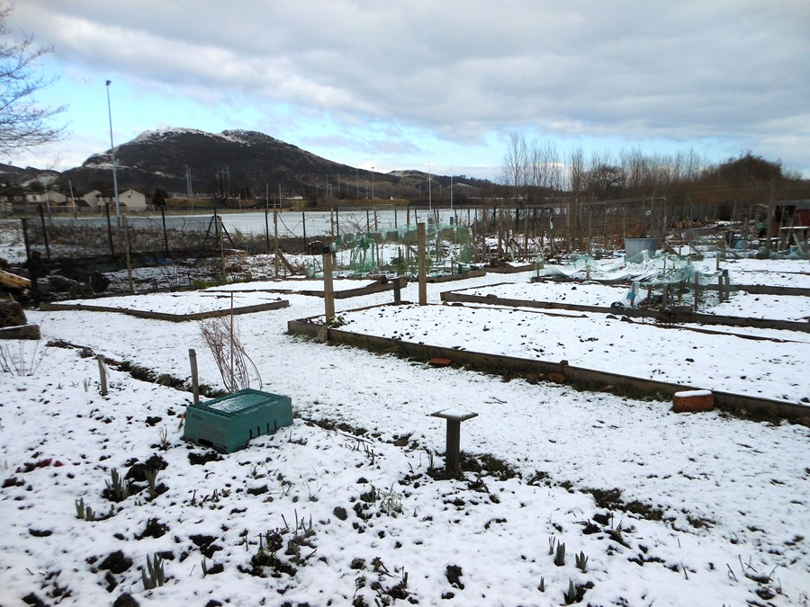 Allotment at end of March 2013