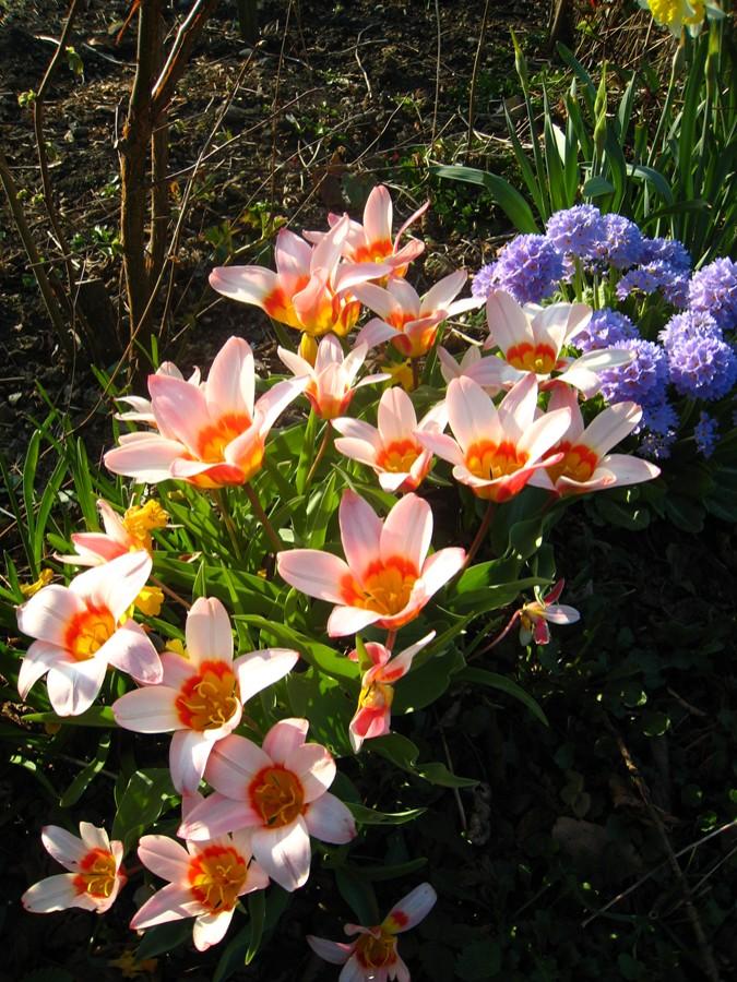 Spring bulbs 2012