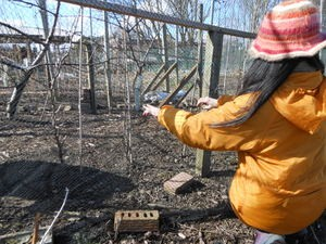 Mending the fruit cage netting