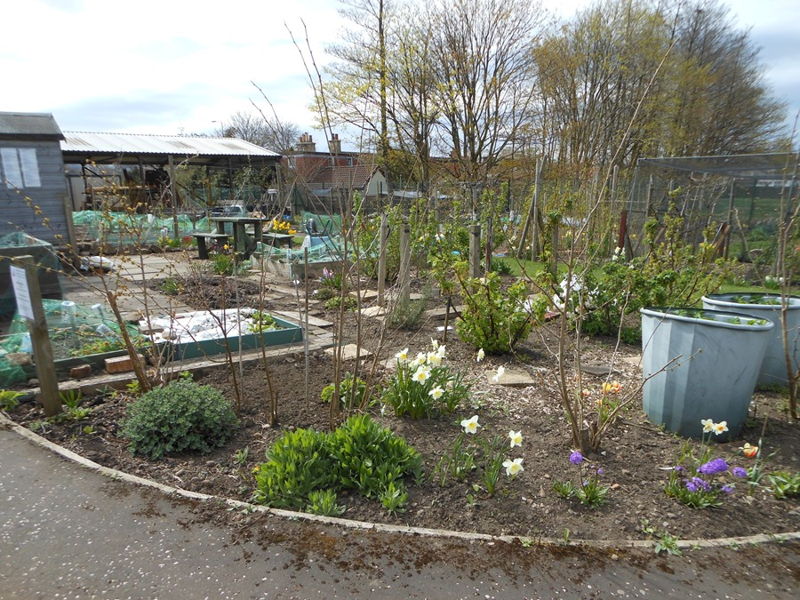 Beginning of May on the allotment