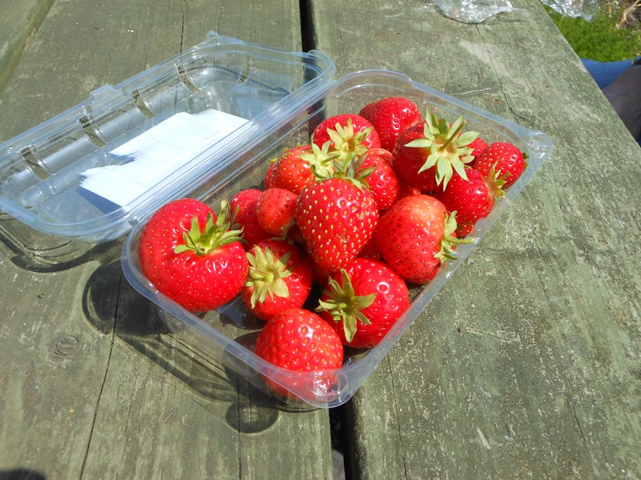 Allotment Strawberries (Symphony)