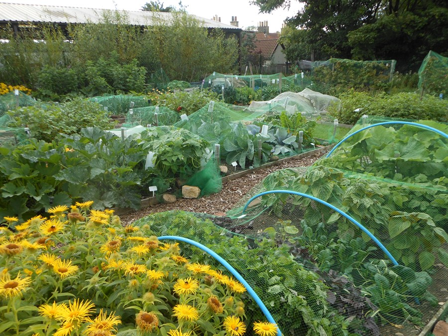 August on the allotment