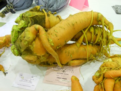Heaviest Carrot at Harrogate Show