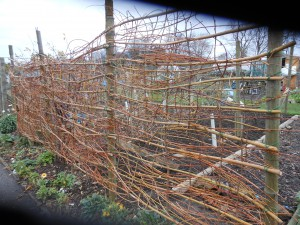 The Willow Windbreak