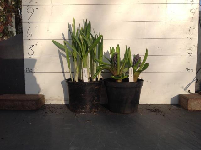 20-feb-workshop-hyacinth