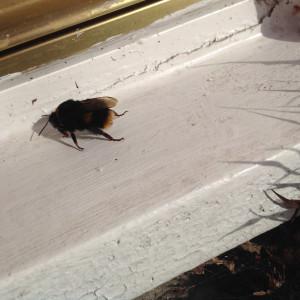 27-feb-bumble-bee