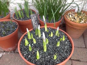 6th-feb-iris