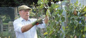 summer-pruningworkshop_web