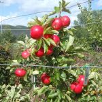 Apple Day – 6th October