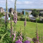 Diary of an Orkney Gardener – Mid-August 2018
