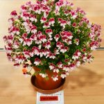 East Lothian Horticultural Society Show