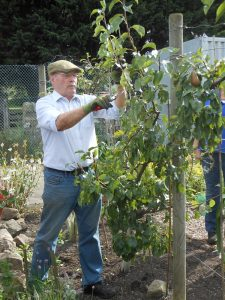 George – Summer Fruit Pruning