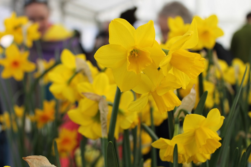 Spring Bulb Show 2019 – Winners