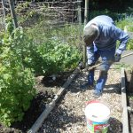 Allotment News