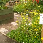Allotment Open Day – Sunday 25th August