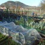 Bright but chilly on the Allotment