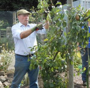 summer-fruit-pruning-workshop-copy