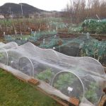 Chilly and wet on the Allotment