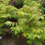 Plant Irritants