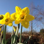 Catch up with George and his bulbs – 1st March
