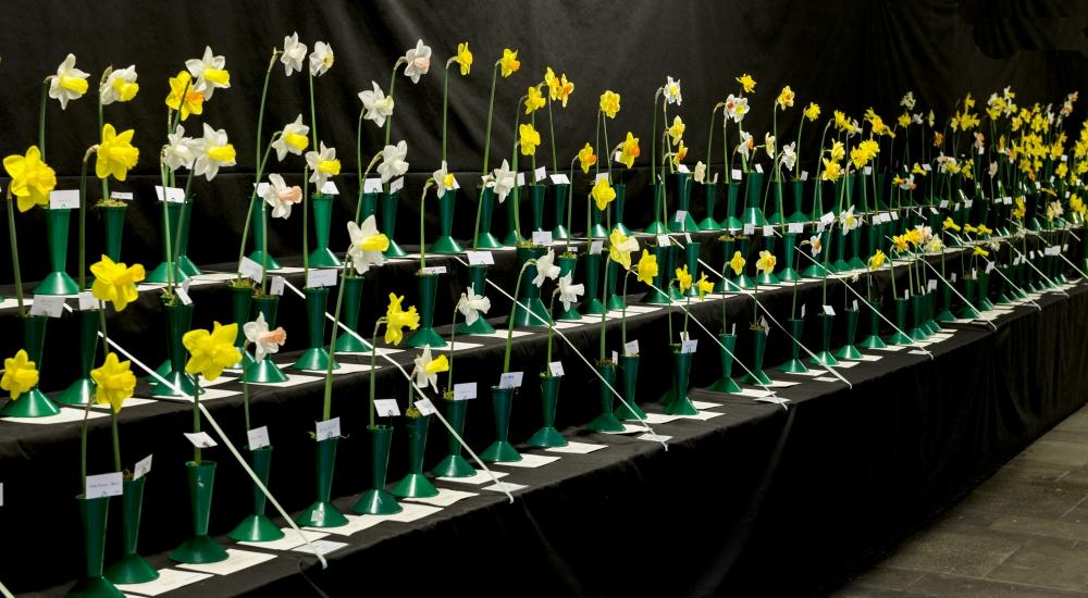 spring-show
